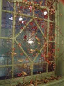 秋 枝のカーテン