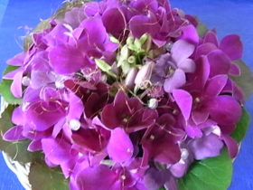 プープル系の花 ラン