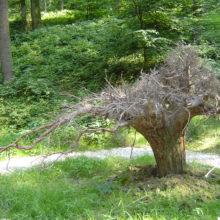 ドイツ記:植物観察1 森へ