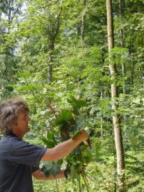 植物観察 ドイツ