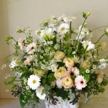 ガーベラ、お悔やみの花
