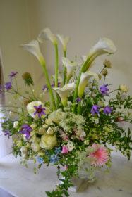 カラー、優しい、柔らかい花