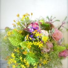 ふわふわ花,スモークツリー